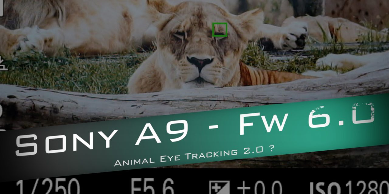 Sony A9 : Animal Eye – Quel progrès face au A7 III ?