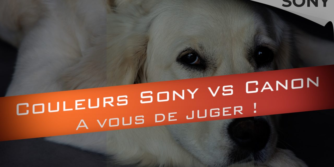 Couleurs Sony VS Couleurs Canon : Qui est le Gagnant ?