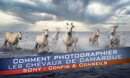 Comment photographier les chevaux de Camargue ? La configuration pour votre Sony