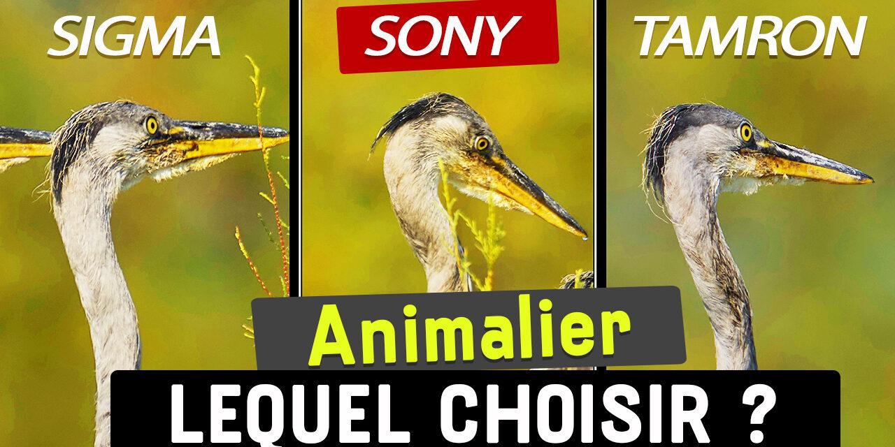 Comparatif Sony 200-600 vs Sigma 150-600 vs Tamron 150-500 : lequel choisir ?
